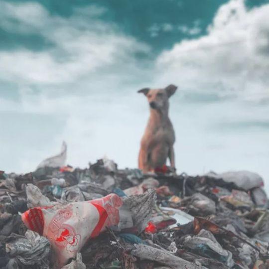 塑料瓶垃圾回收